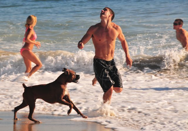 Take Your Dog On A Surf Vacation In Huntington Beach